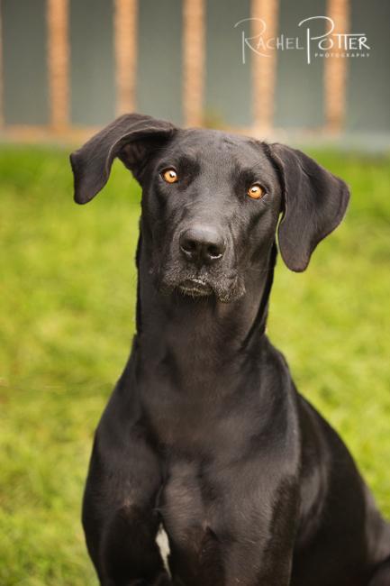 pet photography black dog tips