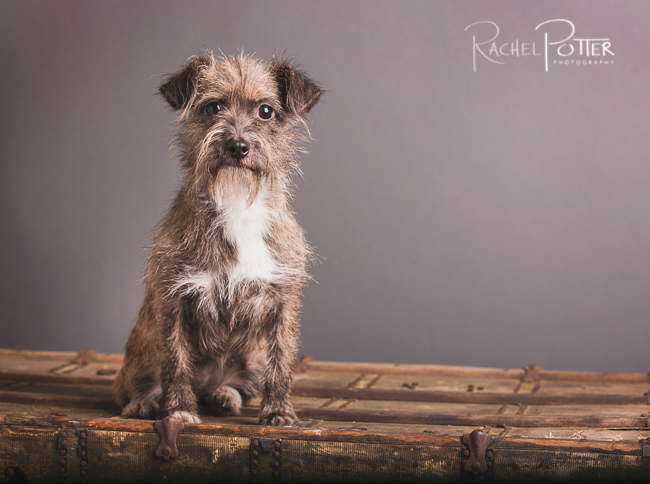 pet photography by rachel potter