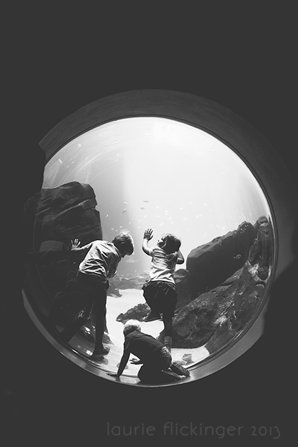 Aquarium-2_CIUAN