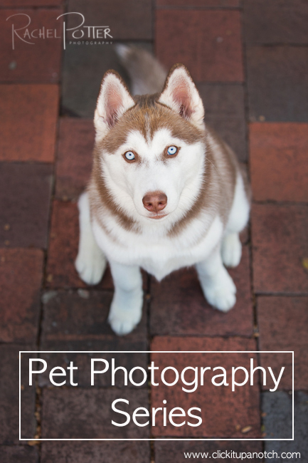 Pet photography series by Rachel Potter via Click it Up a Notch