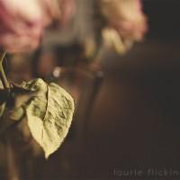 Roses Hot Spot-18_CIUAN