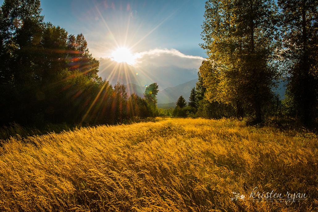 Kristen Ryan ~ Golden Meadow