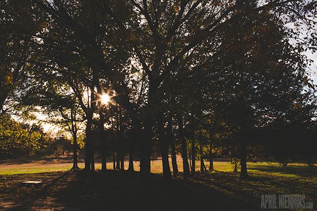 starburst-picture-through-tress-by-April-Nienhuis