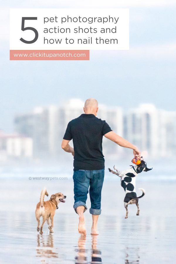 "Wow! I'm going to try her tips our with my dogs today. Read - ""5 Pet Photography Actions Shots and How to Nail Them"""
