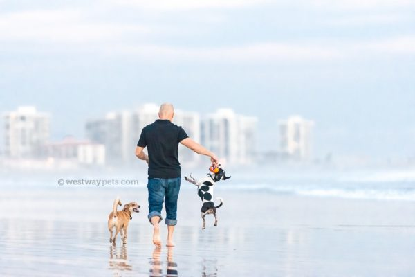 westway-studio-walking-dogs-dad-toy-play-coronado-jump-beach-san-diego-pet-photography