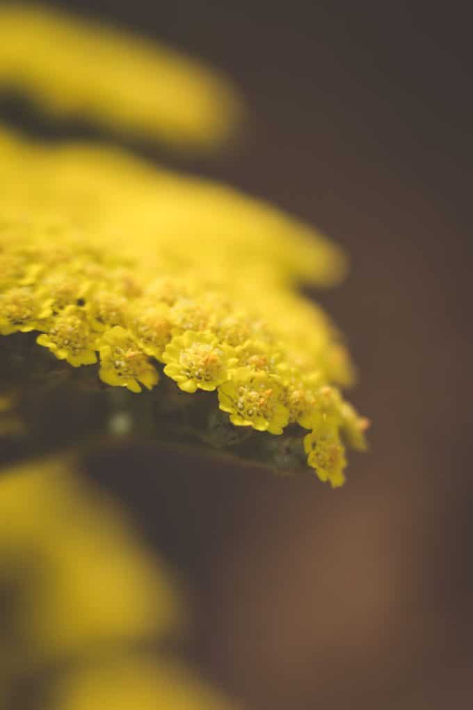 close up macro photo of a yellow flower