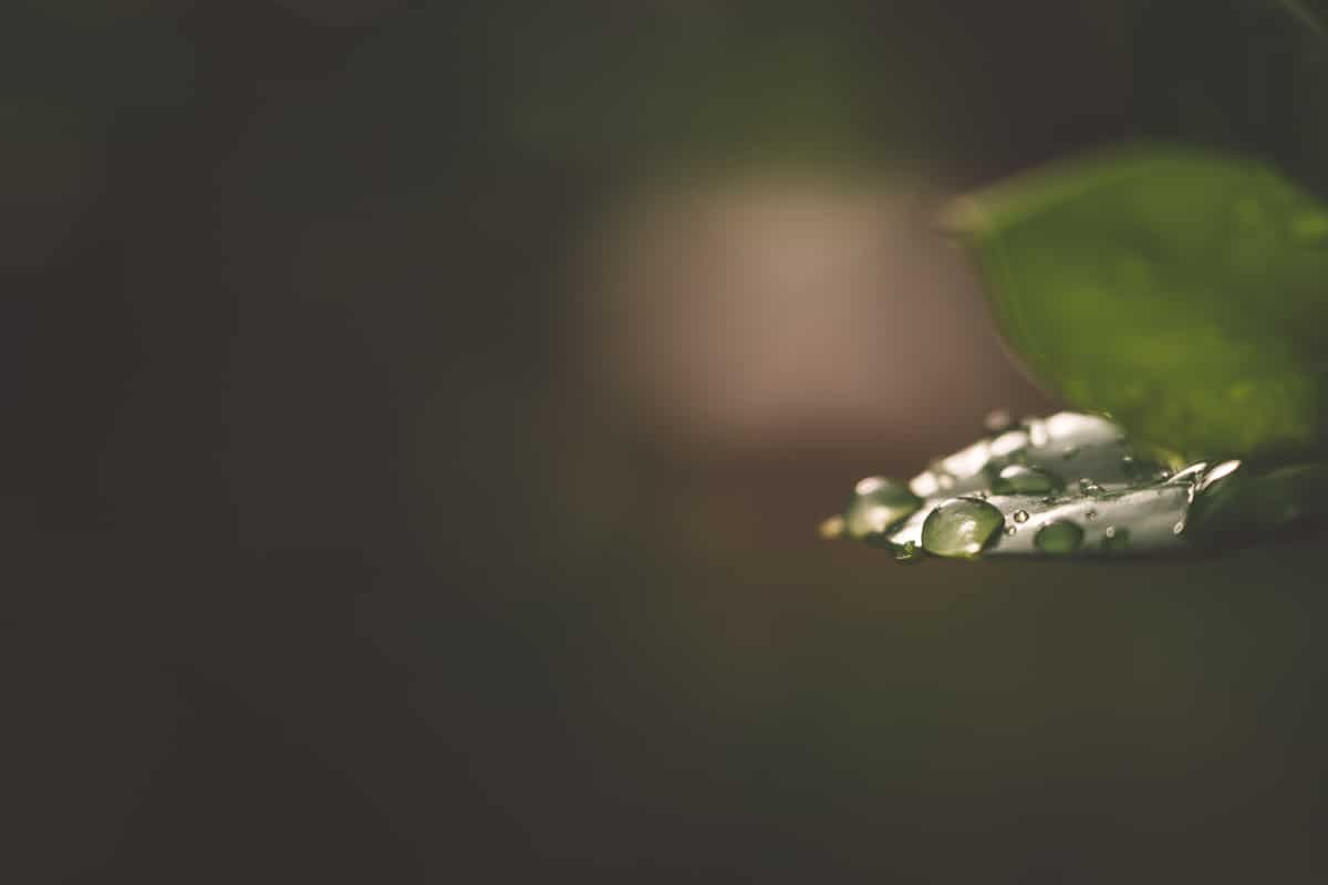 Green leaf with dew drops sitting on top.