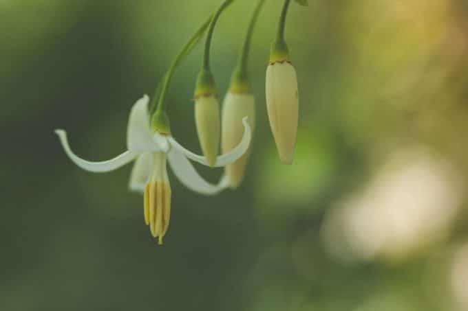 flower with beautiful bokeh creates an interesting macro photography photo