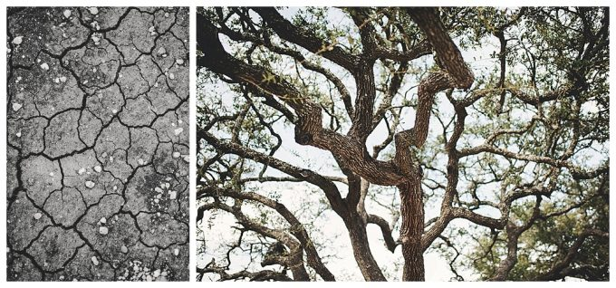 Image of dried mud and a picture of tree limbs to show the photography composition rule of pattern and textures.