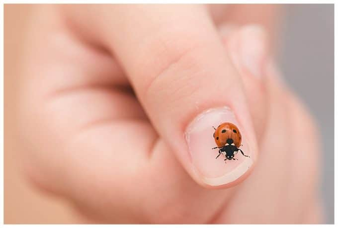 A close up shot of a hand with a ladybug crawling across a thumbnail. The thumb acts as a leading line with is a photography composition rule.