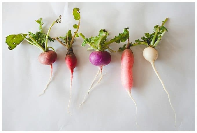 White background with multiple colored root vegetable all in a row showing the rule of repetition.