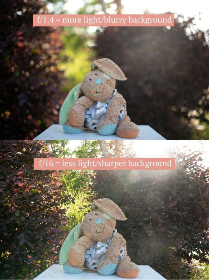 Comparing f/1.4 to f/16 apertures to show difference in blurry background